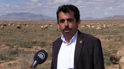 Koyun üreticileri dişi kuzuya ek destek istiyor - KARAMAN
