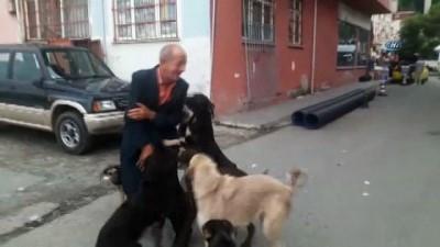 yasli adam -  Köpekler onu 3 gün sonra karşılarında görünce sevinçten çıldırdı