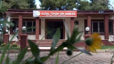 Türkiye'nin gelecek nesillere mirası tohum eksi 19 derece, şifreli odalarda saklanıyor