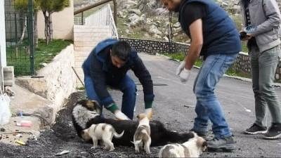 Yaralı sokak köpeğine zabıta ekipleri sahip çıktı