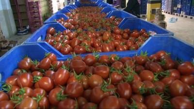 Rusya 100 milyon dolarlık kapıyı bugün açıyor... Rusya'ya sebze ihracatı kademeli olarak başlıyor