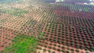 AA, Afrin'in Cinderes beldesini havadan görüntüledi - AFRIN