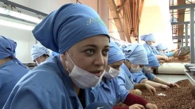 Fındık fabrikasında çalışan kadınlara 'Kadınlar Günü' sürprizi