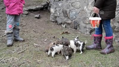 'Minik yürekler' yavru köpekleri sahiplendi - KARS