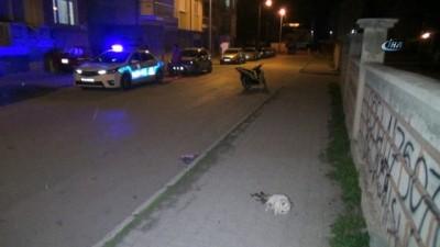 Karaman'da vicdansız sürücü kediye çarpıp kaçtı