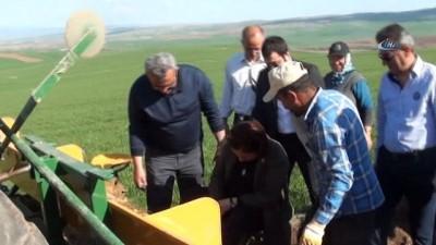 """Çorum'un tarım ve tarih turizmine """"lavanta"""" desteği"""