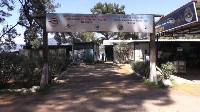 Uluslararası caretta nöbetinin gönüllü ordusu - MUĞLA
