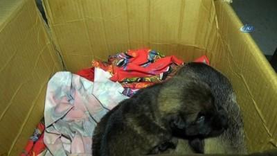Annesiz kalan yavru köpeklere zabıta şefkati