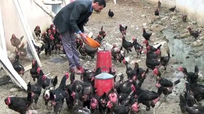 Devlet desteği ile kurduğu çiftlikte siparişlere yetişemiyor - MUŞ
