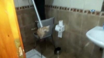 Yavru kediyi 2 günlük esaretinden itfaiye kurtardı