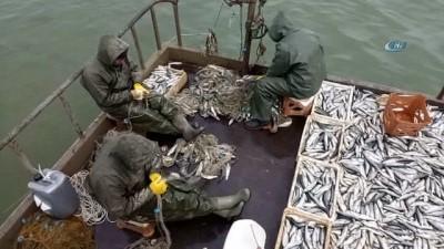 Van Gölü'nde av yasağı başlıyor... Balıkçılar son kez gölden ağlarını çekti