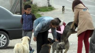 Gönüllü öğrencileri ile sokak köpeklerine sahip çıktılar