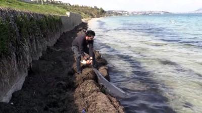 Karadeniz'deki yunus ölümleri - SİNOP