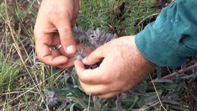 sosyal medya -  Ödüllü botanikçi 3 yeni nakıl bitkisi keşfetti
