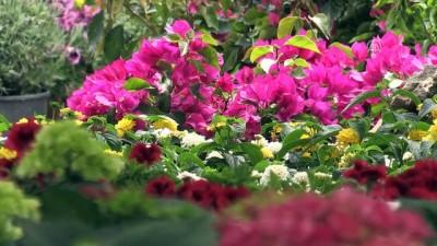 cep telefonu - 'Turizm başkenti'nde ilkbahar bir başka güzel - ANTALYA
