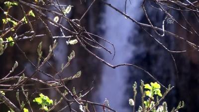 Sırakayalar Şelalesi'nde ilkbahar güzelliği - BAYBURT