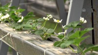 Islah edilen 'çöplük'te 40 çeşit meyve sebze yetiştiriliyor - ZONGULDAK