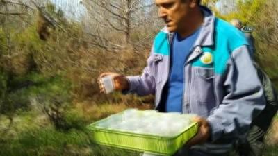 Terminatör böcekler doğaya salındı