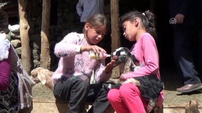 a haber - Anneleri çalınan kuzular biberonla besleniyor - MUŞ