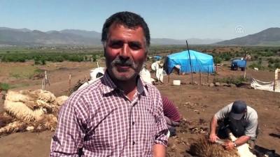 Doğu Akdeniz'de koyun kırkım zamanı - HATAY