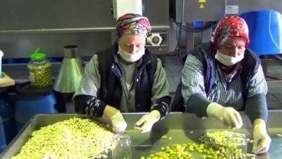 Zeytinyağı ihracatı rekora koşuyor - BALIKESİR