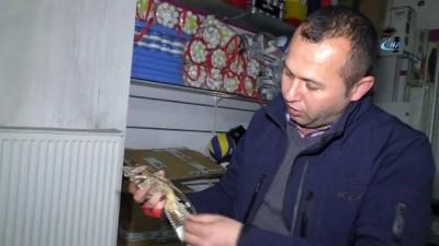 Esrarengiz Ebabil kuşu Ağrı'da mağazaya girdi
