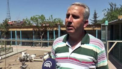 Emekli işçinin 'uluslararası süs tavuğu' tutkusu- KAYSERİ