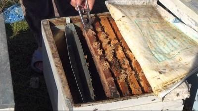 Adana İl Gıda Tarım ve Hayvancılık Müdürü Tekin: 'Arı otunu yaygınlaştırarak bal üretimini artıracağız'