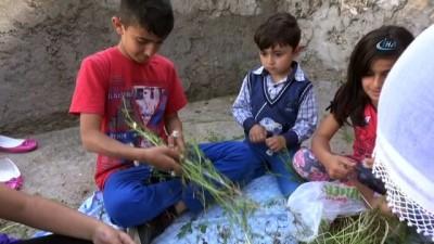 Gercüş'te vatandaşlar şifa için papatya topluyor