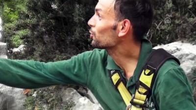 Keçiyi kurtarmak isterken mahsur kaldı -Drone görüntüleri - MUĞLA
