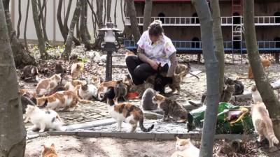 Bu kasabada sokak kedileri için her türlü konfor var - SAMSUN