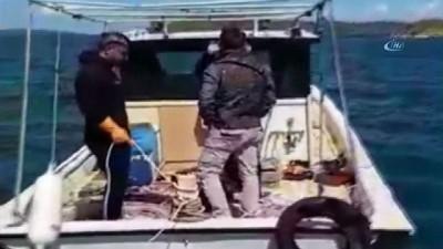 Deniz patlıcanı yakalayanlara operasyon kamerada