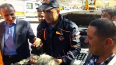Aracın motoruna giren yavru keçi kurtarıldı