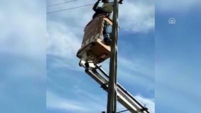 Yüksek gerilim tellerine takılan güvercin kurtarıldı - AĞRI