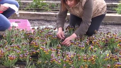 Yerli süs bitkileri tescillendi - ERZİNCAN