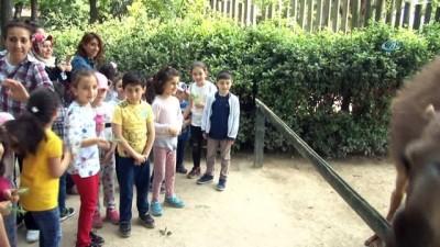 Bahar geldi, Hayvanat Bahçesi'nin bebek üyeleri çocukların maskotu oldu