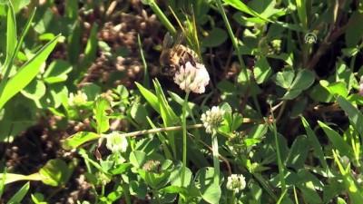 Bal arılarının yayla yolculuğu başladı - BATMAN