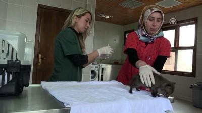 Biberonla beslediği tilki yavrusuna özenle bakıyor - SAMSUN