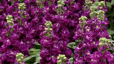 Çiçekler anneler için yola çıkarıldı - YALOVA
