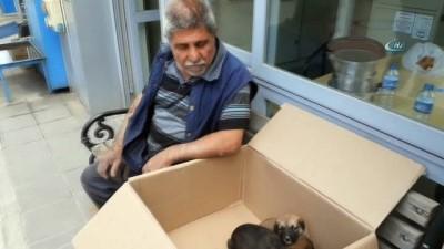 Anneleri ölen 7 yavru köpek koruma altına alındı