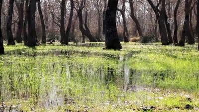 Kızılırmak Deltası kuş gözlemcilerini bekliyor - SAMSUN
