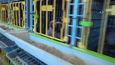 Malatya'da kınalı keklik üretimi