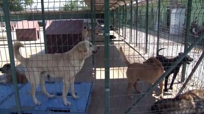 '500 köpeğin telef edildiği iddiası asılsızdır' - EDİRNE