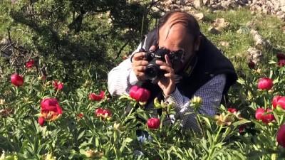 'Ayı Gülü'nü koparana 48 bin lira ceza - AFYONKARAHİSAR