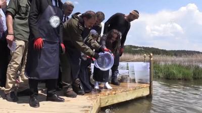 Abant Gölü'ne 100 bin Abant alası bırakıldı - BOLU