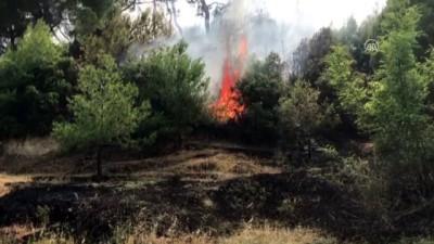 Orman yangını - ANTALYA Haberi
