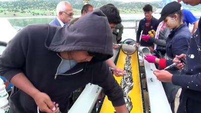 Üniversite öğrencileri günde 50 bin balık aşılıyor - YOZGAT