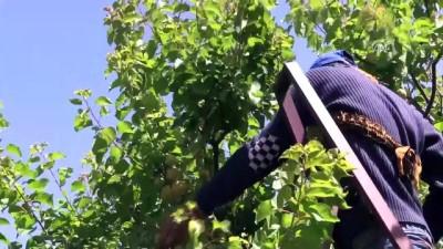 Suriyeli tarım işçilerinin zorlu ramazan mesaisi - HATAY Haberi