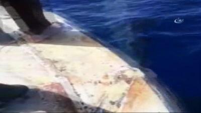 Fethiye'de balina görüldü Haberi