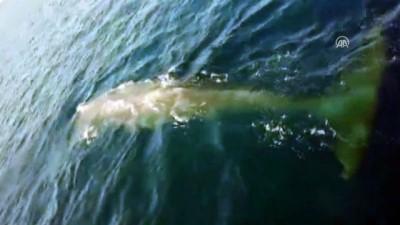 Fethiye'de balina görüntülendi - MUĞLA